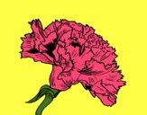 Flor de clavel