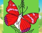 Mariposa 5a