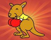 Canguro boxeando