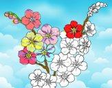 Dibujo Flor de cerezo pintado por Cetaceo