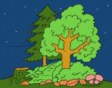 Dibujo Bosque 1 pintado por LunaLunita