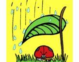 Mariquita protegida de la lluvia