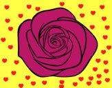 Flor de rosa
