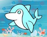 Delfín común