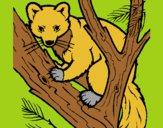 Marta europea en el árbol