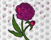 201802/peonia-naturaleza-flores-pintado-por-paty1-11253684_163.jpg