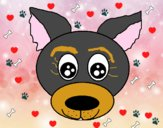 Cara de cachorro