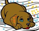 Perrito alfombra