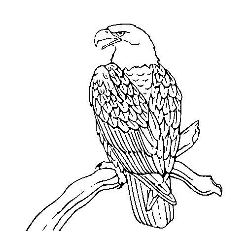 Dibujo de Águila en una rama para Colorear