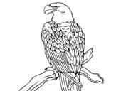 Dibujo de Águila en una rama