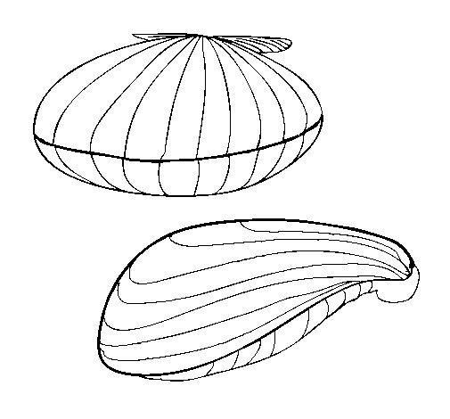 Dibujo de Almejas para Colorear