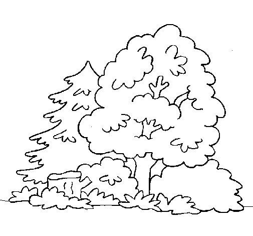 Dibujo de Bosque para Colorear