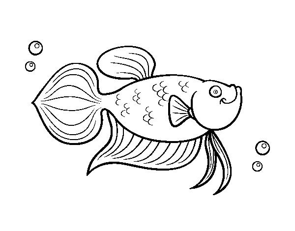 Dibujo de Carpa dorada para Colorear  Dibujosnet