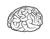 Dibujo de Cerebro para colorear