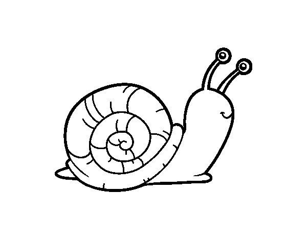 dibujo de el caracol para colorear