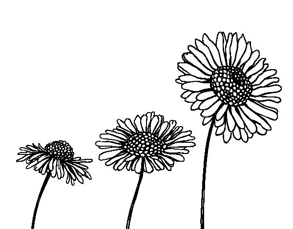 Dibujo De Flor De Cerezo Para Colorear: Dibujo De Flor De Camamilla Para Colorear