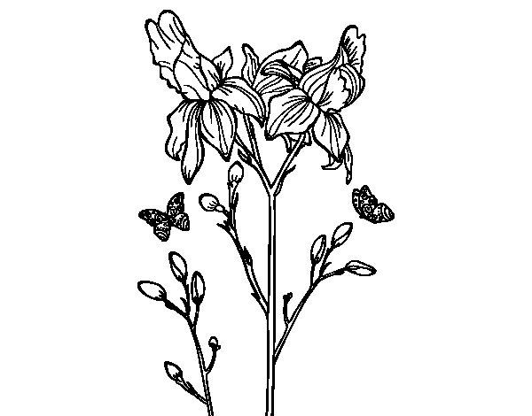Dibujo De Flor De Cerezo Para Colorear: Dibujo De Flor De Iris Para Colorear