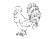 Dibujo de Gallo de una granja para colorear