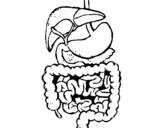 Dibujo de Intestinos para colorear