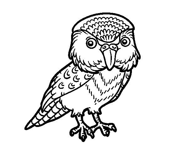 Dibujo de Kakapo para Colorear
