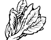Dibujo de Lechuga II para colorear