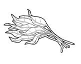 Dibujo de Manojo de espinacas para colorear
