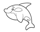 Dibujo de Orca joven para colorear