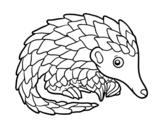 Dibujo de Pangolin para colorear