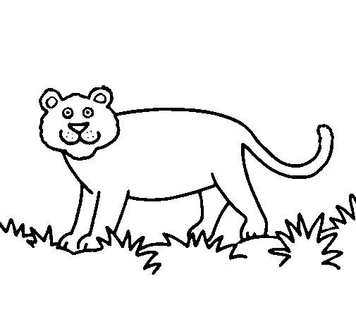 Dibujo de Pantera para Colorear