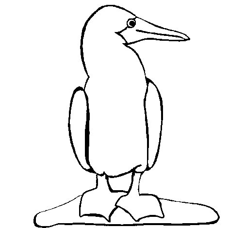 Dibujo de Pato 1 para Colorear