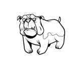 Dibujo de Perro bulldog inglés para colorear