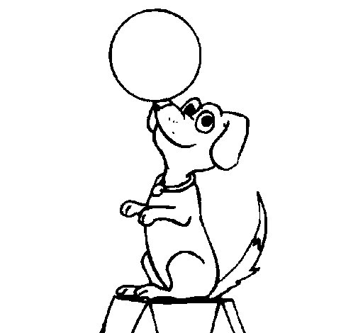 Dibujo de Perro de circo para Colorear