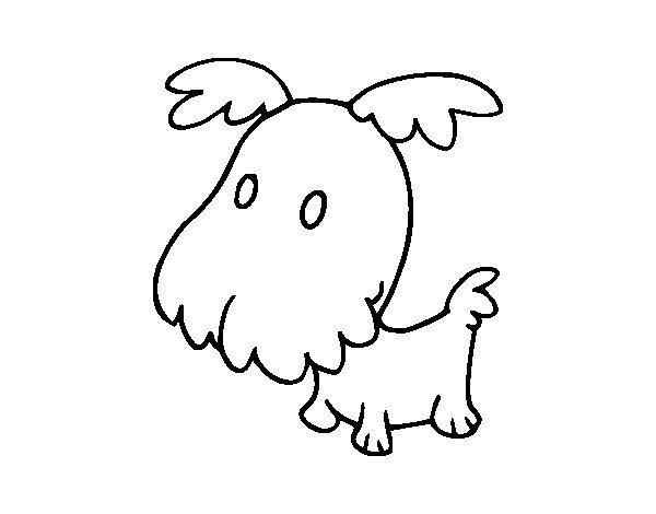Dibujos Para Colorear De Cachorros De Perros: Dibujo De Perro Grifón Cachorro Para Colorear