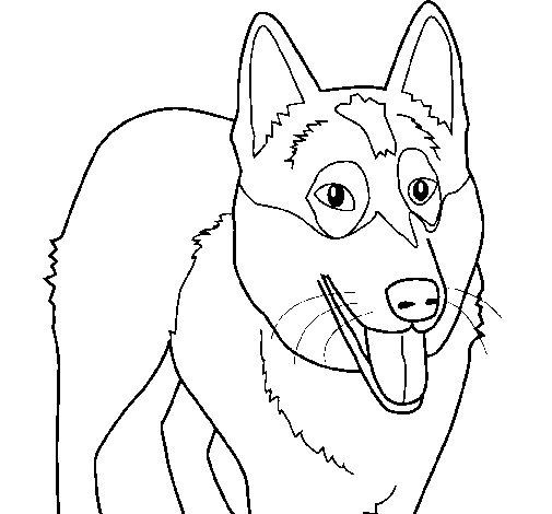 Dibujo de Perro Pastor Alemán para Colorear