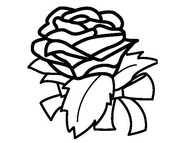 Dibujo De Rosa, Flor Para Colorear