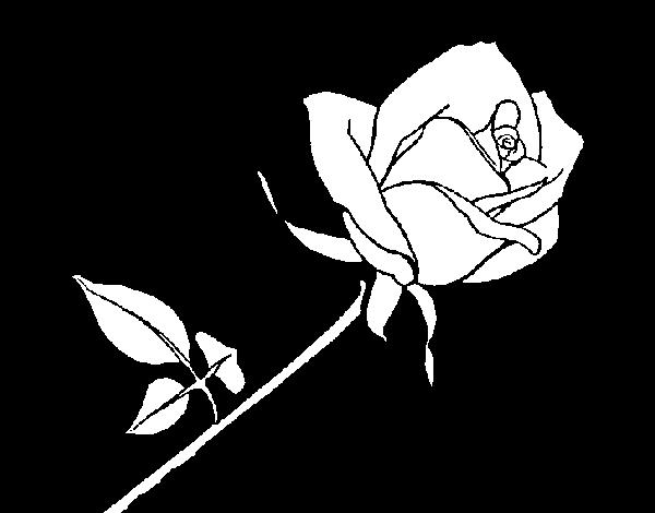 Imagenes De La Rosa De Guadalupe En Dibujo