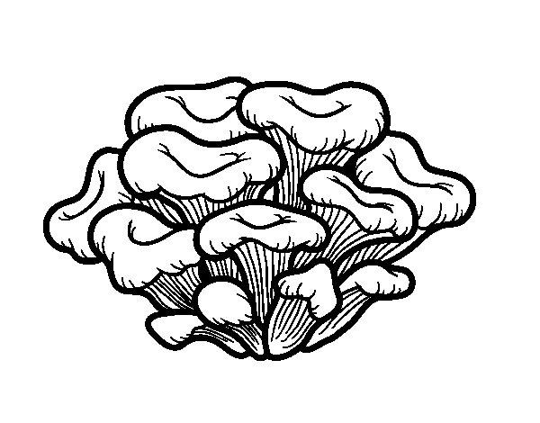Dibujo de Seta maitake para Colorear