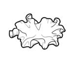Dibujo de Seta oreja de madera para colorear