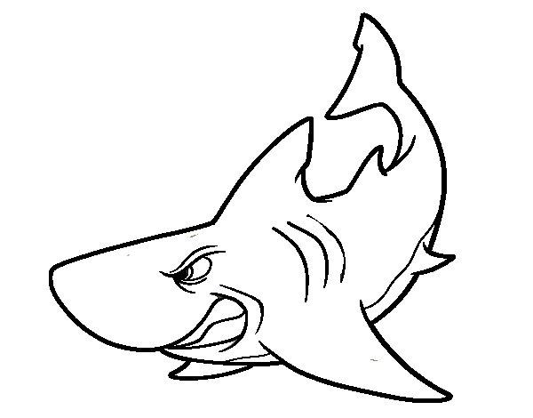 Dibujo de tibur n enfadado para colorear for Immagini squali da stampare
