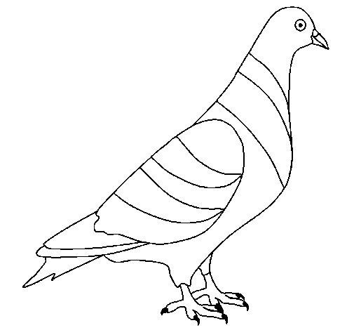 Dibujo de Tórtola para Colorear