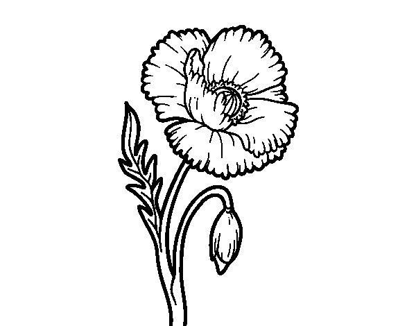 Dibujo de Una flor de amapola para Colorear