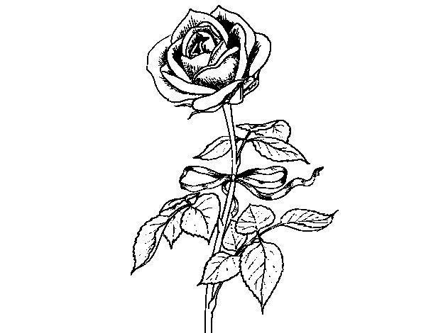 Dibujo de Una rosa para Colorear  Dibujosnet
