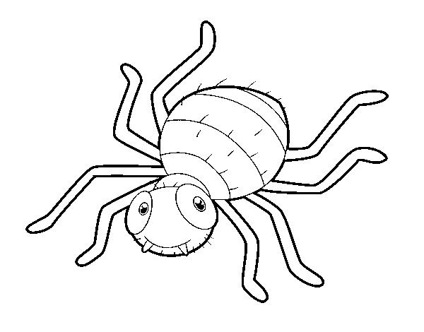 Dibujo De Araña Infantil Para Colorear Dibujosnet