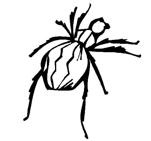 Dibujo de Araña viuda negra para Colorear - Dibujos.net