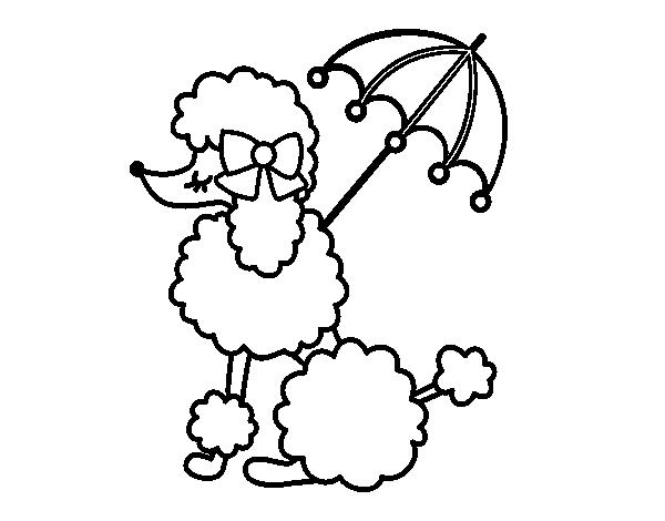 Dibujo de Caniche con sombrilla para Colorear - Dibujos.net