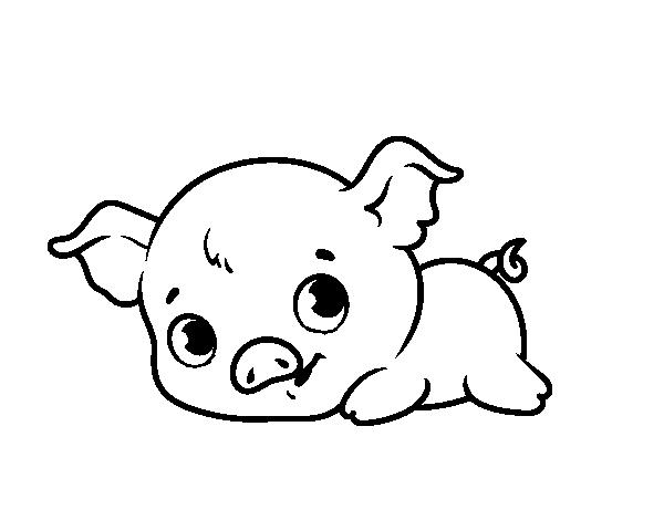 Dibujo De Cerdito Bebé Para Colorear Dibujosnet