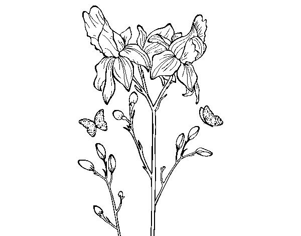 Dibujo de flor de iris para colorear - Coloriage fleur iris ...