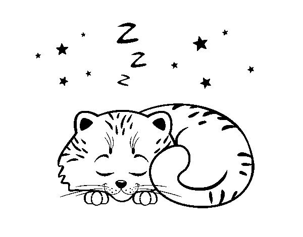 Dibujo de Gatito durmiendo para Colorear - Dibujos.net