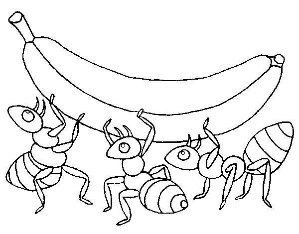 Dibujo de Hormigas con plátano para Colorear - Dibujos.net