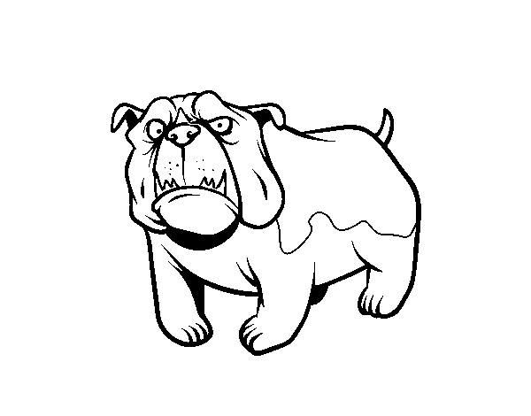 Dibujo De Perro Bulldog Inglés Para Colorear Dibujosnet